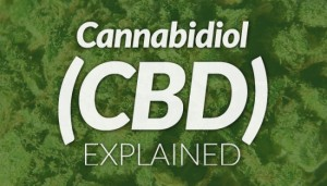 CBD Explained