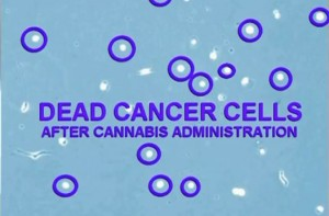 Dead Cancer Cells