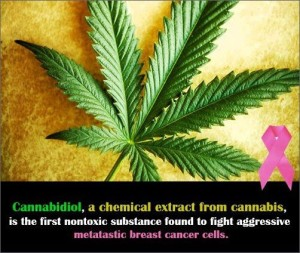 Cannabidiol-a-chemical-extract-from-cannabis-is-the-first-nontoxic-substance-found-to-fight-aggressive-metatastic-breast-cancer-cells