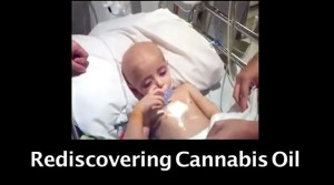 Rediscovering Cannabis Oil