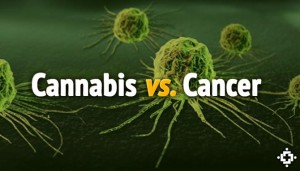 Watch Molecular Biologist Explain How THC Completely Kills Cancer Cells