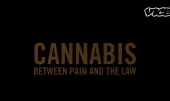 Serbian Cannabis: Between Pain and the Law