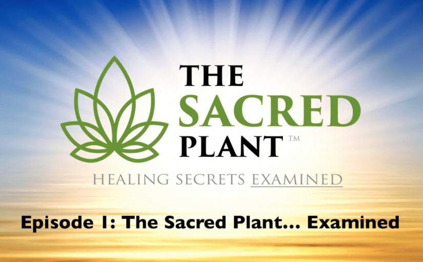 The Sacred Plant: Healing Secrets Examined – Episode 1
